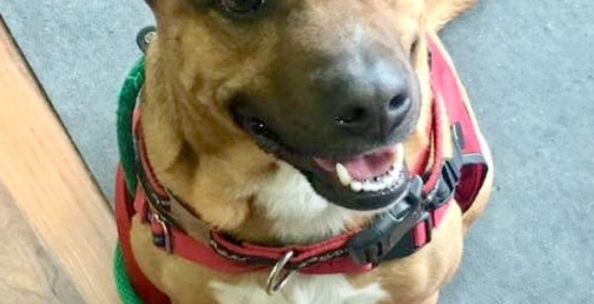 Adoption Archives - Becky's Pet Care
